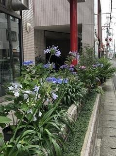 プチプチプチプチあじさいロード (2).jpg