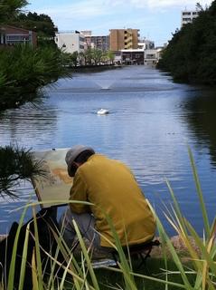 明石公園 白鳥.jpg