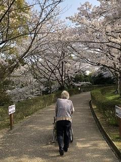 桜 2018 (13).jpg