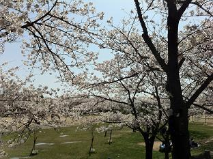 石ヶ谷公園 (3).jpg