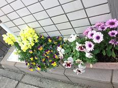 花壇 (1).jpg